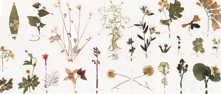 Emily-Dickinsons-Herbarium_Featured